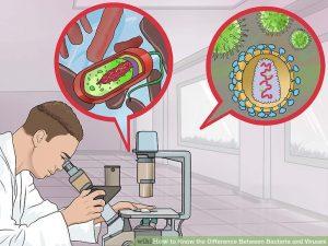 تفاوت بین باکتری و ویروس