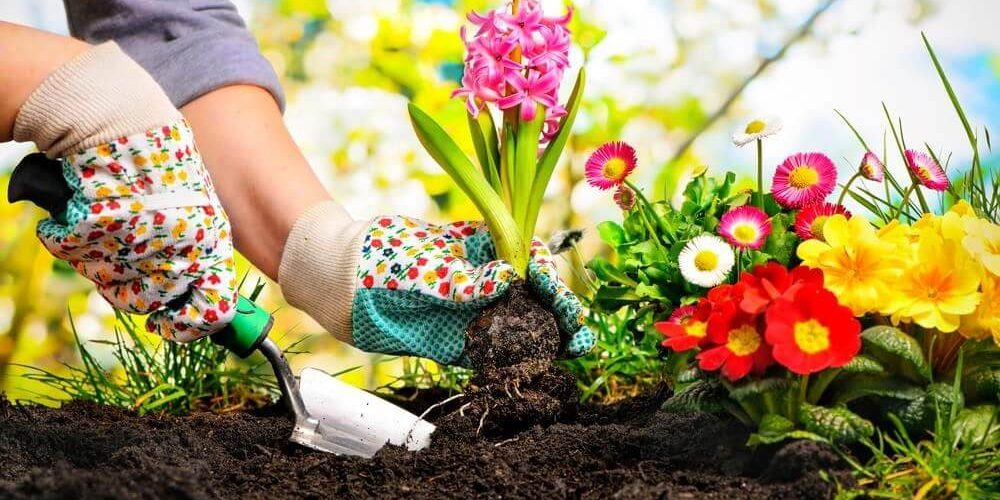 چه خاکی برای گلدان مناسب است
